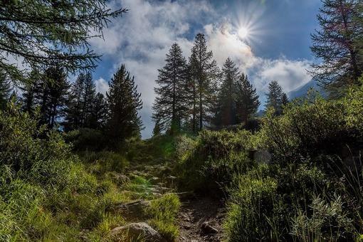 Floresta de montanha: características, flora, fauna e clima 1
