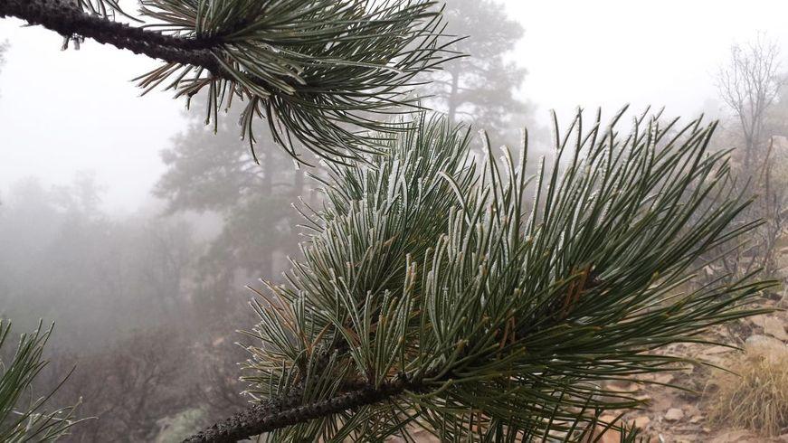 Floresta de montanha: características, flora, fauna e clima 3