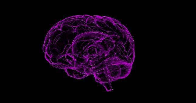 Sistema nervoso parassimpático: partes, funções, neurônios 1