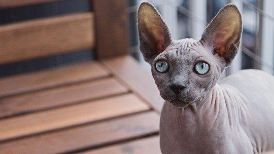 Por que os olhos de gatos brilham? A ciência responde 1