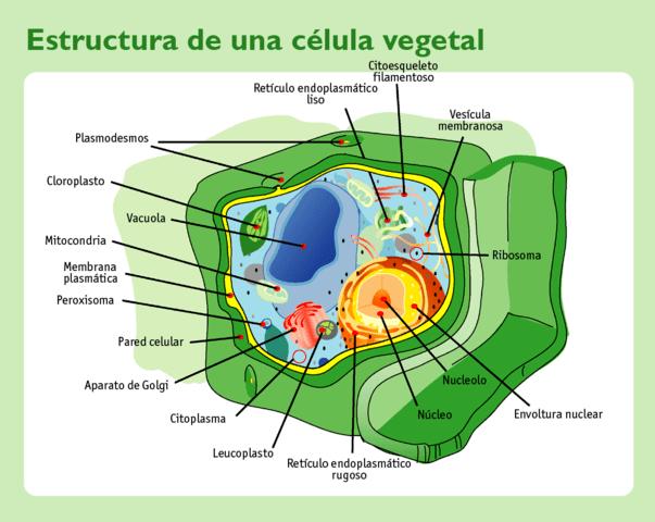 Tipos de células: Procariontes e eucariotos (com imagens) 3