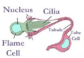 Célula flamejante: estrutura e funcionamento 1