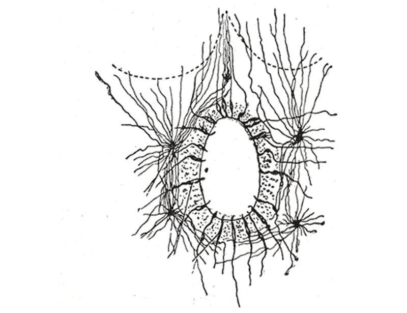 Células ependimárias: histologia, tipos e funções 1