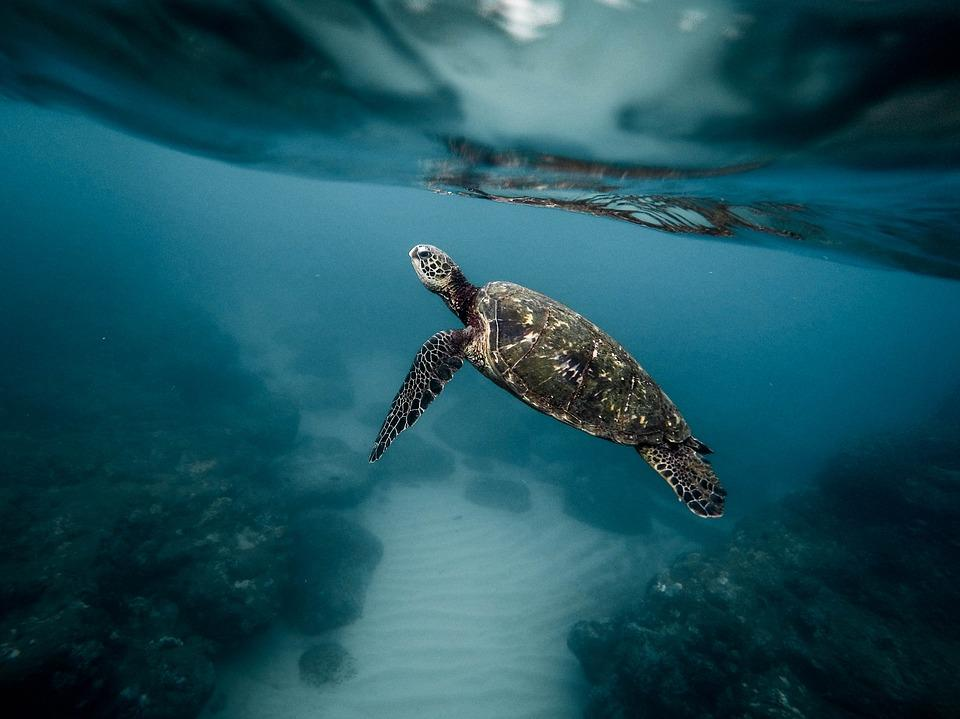 Como os animais que vivem debaixo d'água conseguem respirar? 1