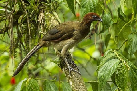 20 Animais da costa equatoriana e suas características 11