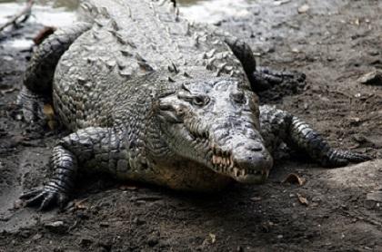 20 Animais da costa equatoriana e suas características 7