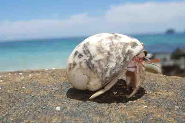 Os 27 animais marinheiros invertebrados mais incríveis 11