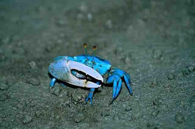 Os 27 animais marinheiros invertebrados mais incríveis 18