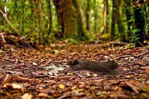 Havia comunidades no Equador que praticavam canibalismo? 1