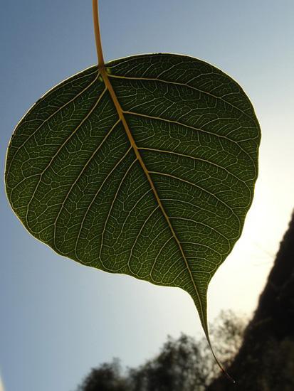 Qual é a capilaridade das plantas? 1