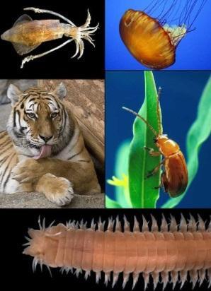 As 15 principais características dos seres vivos 1