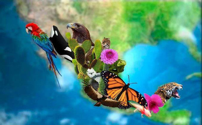 Fatores e características de risco para a biodiversidade no México 1