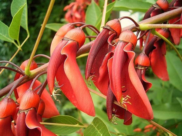 A flora da costa peruana: espécies e conservação 7