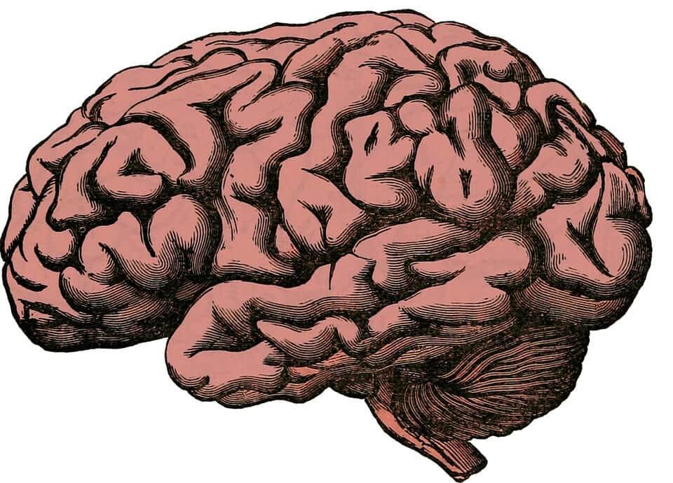 Cerebelo: estrutura, funções e anatomia (com imagens) 4