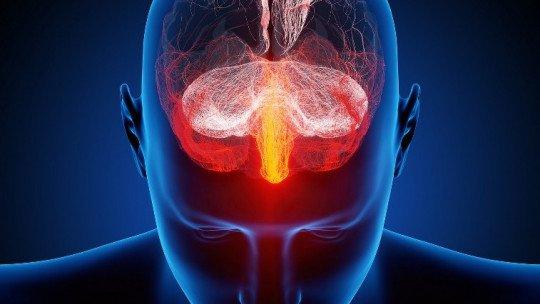 O que torna o cérebro humano tão especial? 1