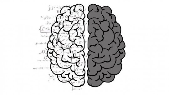 Cérebro humano: suas estruturas e principais áreas 1