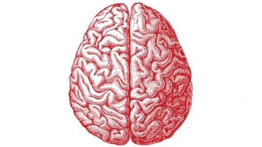 """Diferenças cerebrais entre estudantes de """"letra"""" e """"ciência"""" 1"""