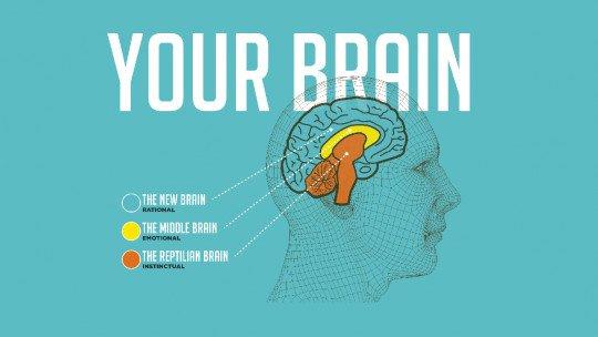 O modelo dos 3 cérebros: réptil, límbico e neocórtex 1