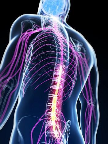 Líquido cerebrospinal: características, circulação, função 4
