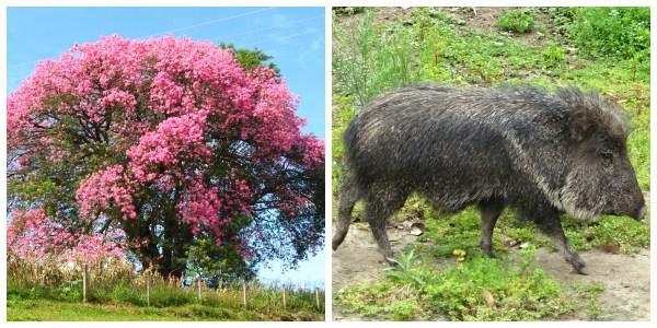 Flora e fauna do Chaco: espécies mais representativas 1