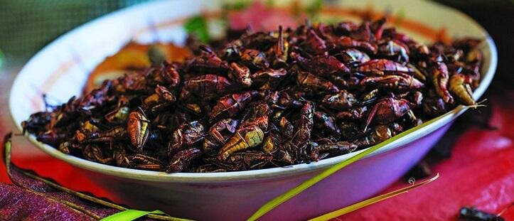 12 alimentos pré-hispânicos e seus ingredientes 8