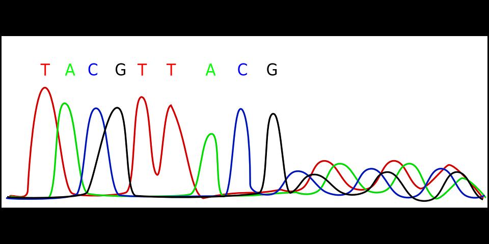 Sequenciamento de DNA: Maxam-Gilbert, método e exemplos 1