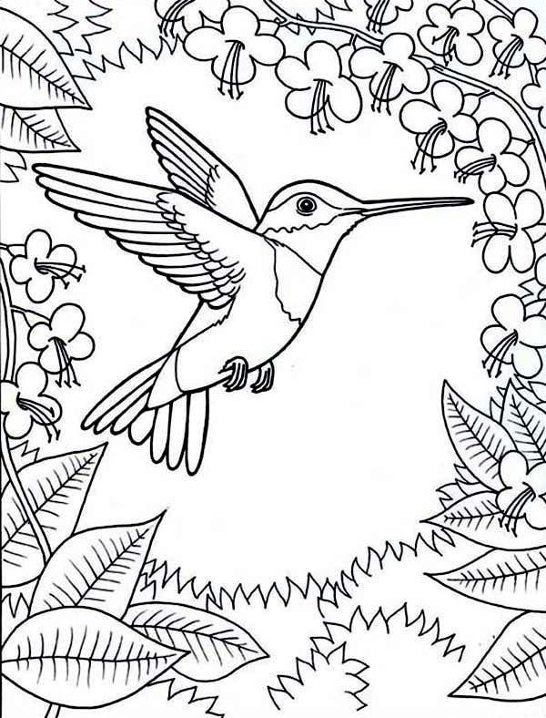 Ciclo de vida do beija-flor: estágios e características (imagens) 11