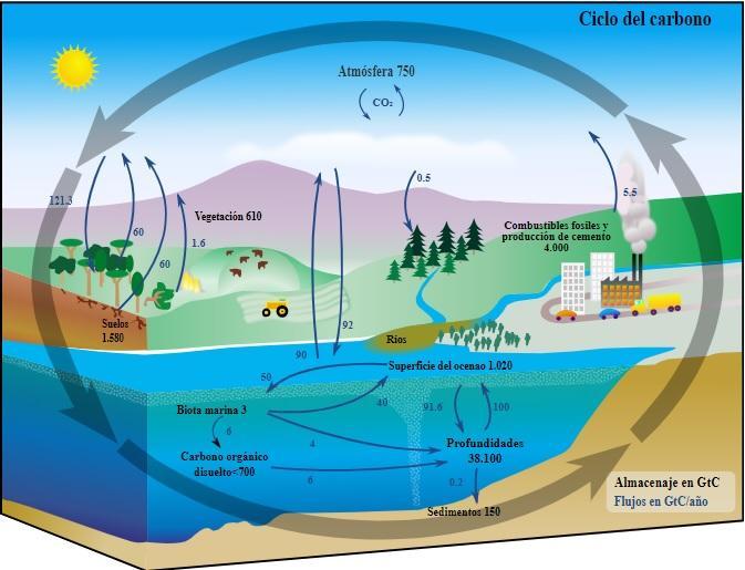 Ciclo do carbono: características, reservatórios, componentes 1