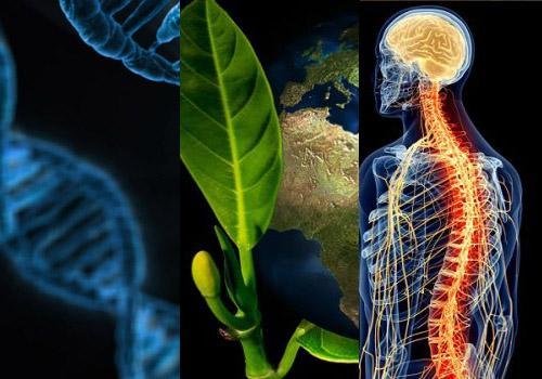 Importância da biologia: 10 razões principais 3