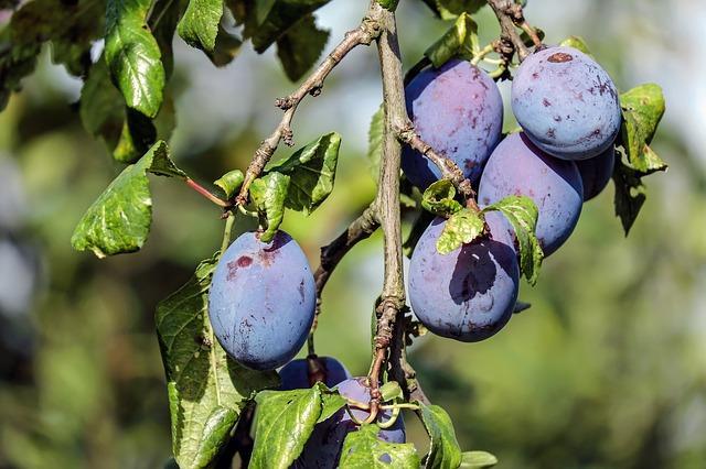 Os 5 tipos de frutas mais importantes 3