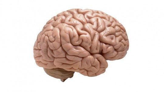 Silvio Cisura (cérebro): o que é, funções e anatomia 1