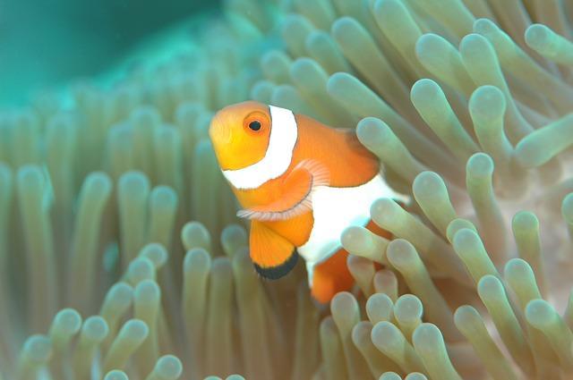 Simbiose: tipos, características e exemplos na natureza 6