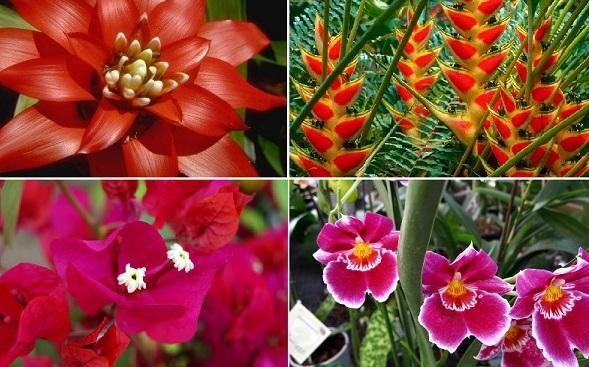 Plantas Florestais: 5 Tipos e Características 1
