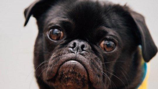 Como eliminar as pulgas do meu cão? 4 dicas 1