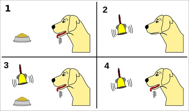 Experimento canino de Pavlov (condicionamento clássico) 5
