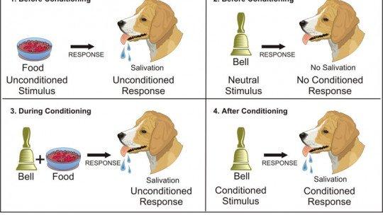 Condicionamento clássico e seus experimentos mais importantes 1