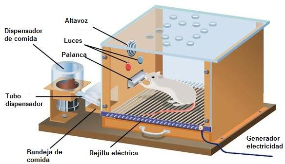 Qual é o estágio sensório-motor? 2