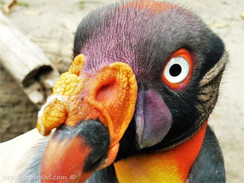 Floresta tropical do Pacífico: características, flora, fauna, clima 4