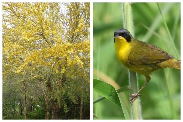 Flora e fauna de Córdoba (Argentina): espécies representativas 1