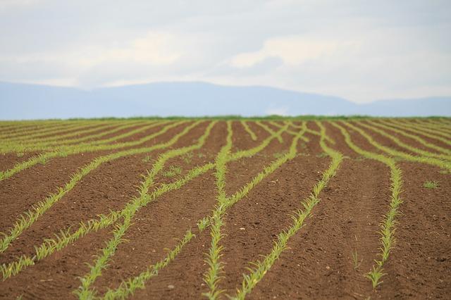 Paisagem agrícola: características, exemplos, diferenças com a paisagem urbana 2