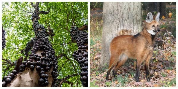 Flora e fauna de Corrientes: espécies mais representativas 1