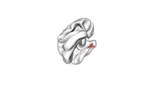 Corteza entorrinal (cerebro): ¿qué es y qué funciones tiene? 1