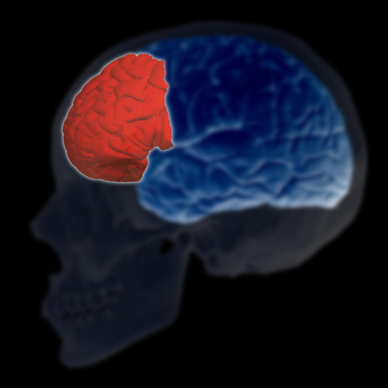 Fisiopatologia da depressão: principais características 4