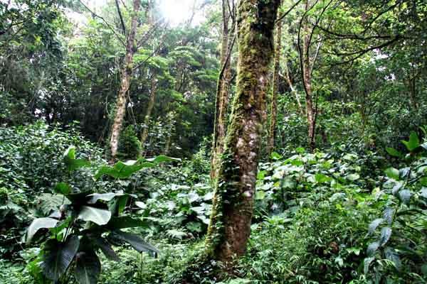 Fatores abióticos da selva e suas características 2