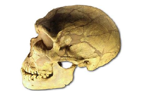 Paleolítico: estágios, características, ferramentas, economia 4