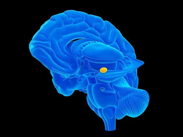 Epilepsia do lobo temporal: sintomas, causas, tratamento 4