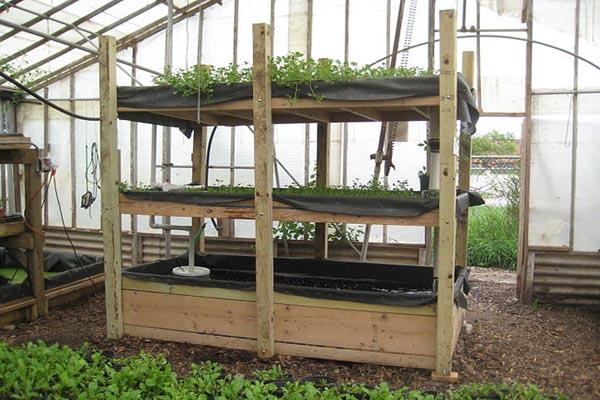 Jardim hidropônico: para que serve e como funciona 4
