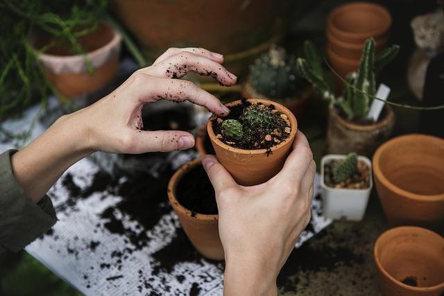 Cultura ambiental: conceito, importância, exemplos 1