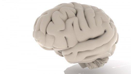 11 curiosidades sobre o cérebro 1