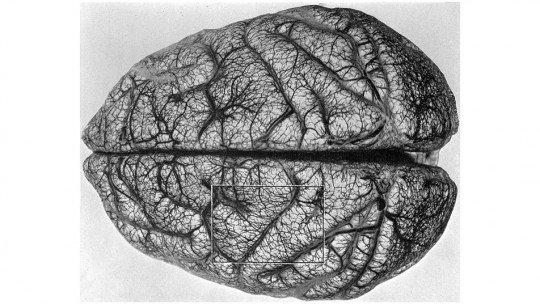 12 cursos de Neurociência gratuitos e online 1